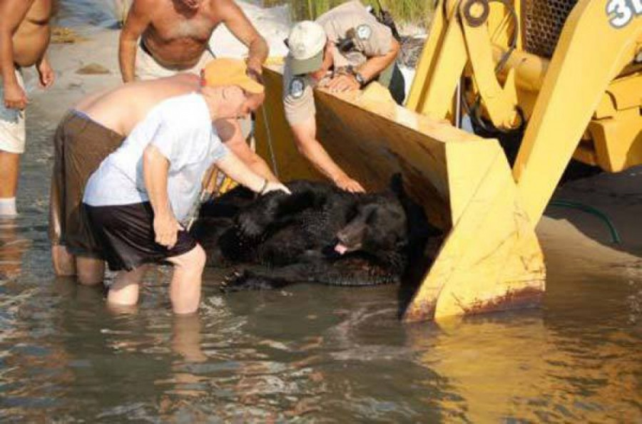 il-sauve-un-ours-de-170-kilos-sur-le-point-de-se-noyer-195973