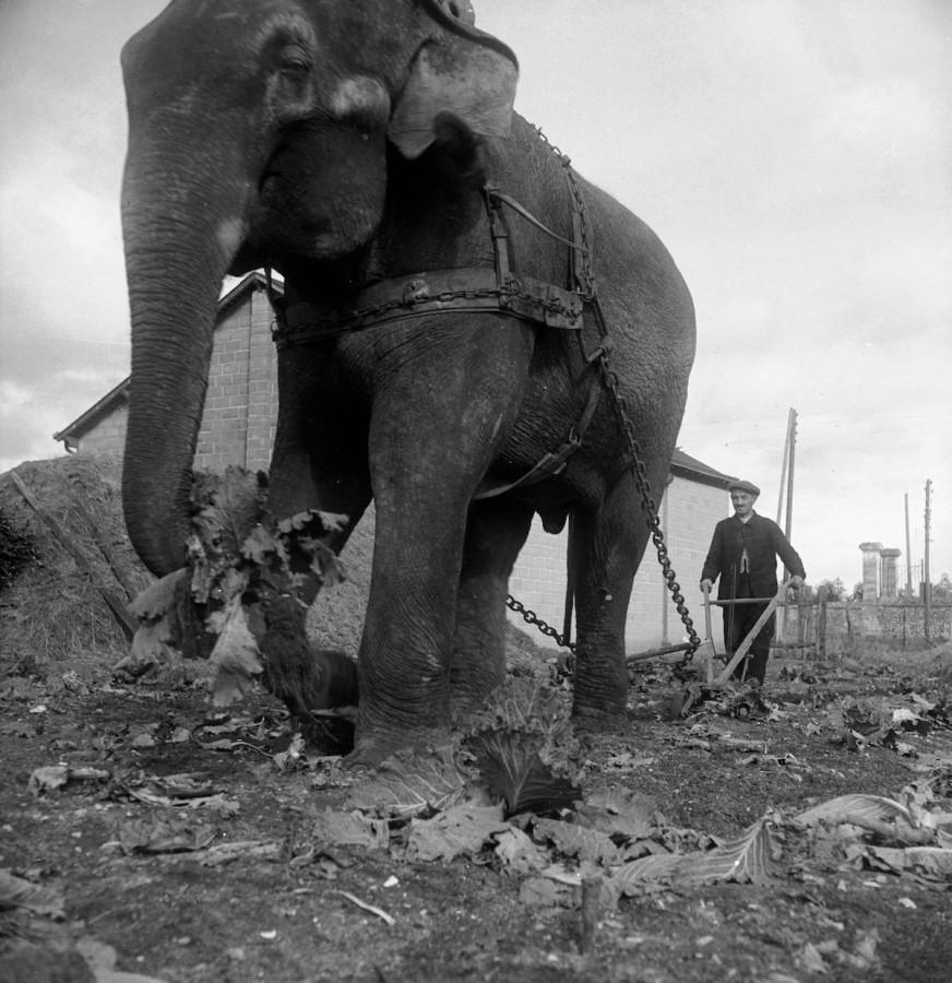 slony-dlya-selskohozyaystvennyh-rabot-foto_3