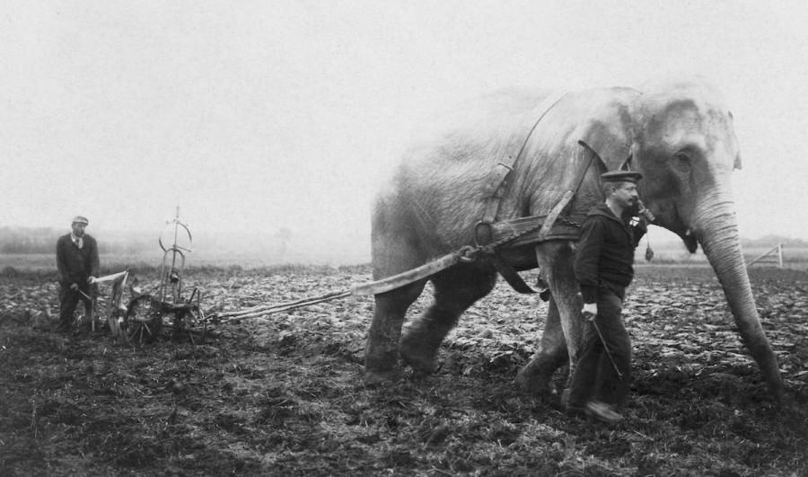 slony-dlya-selskohozyaystvennyh-rabot-foto_1