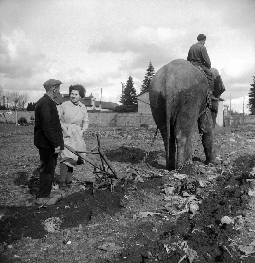 slony-dlya-selskohozyaystvennyh-rabot-foto_5