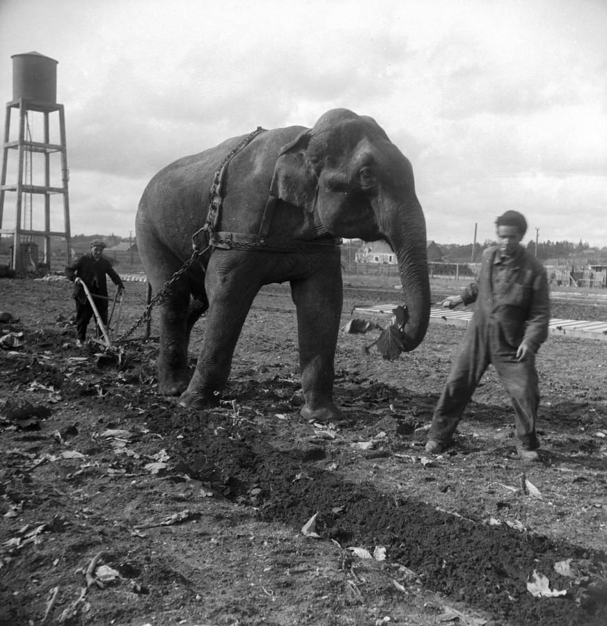 slony-dlya-selskohozyaystvennyh-rabot-foto_6