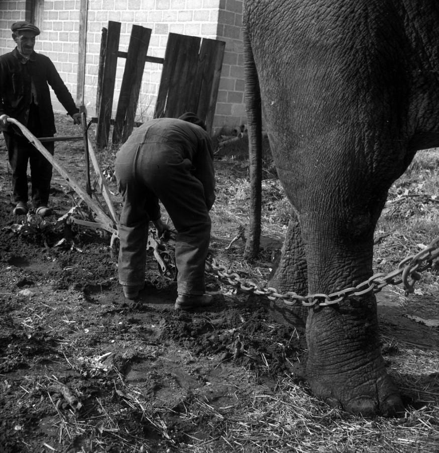 slony-dlya-selskohozyaystvennyh-rabot-foto_7