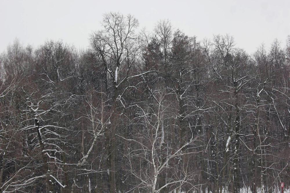 Настоящая зима