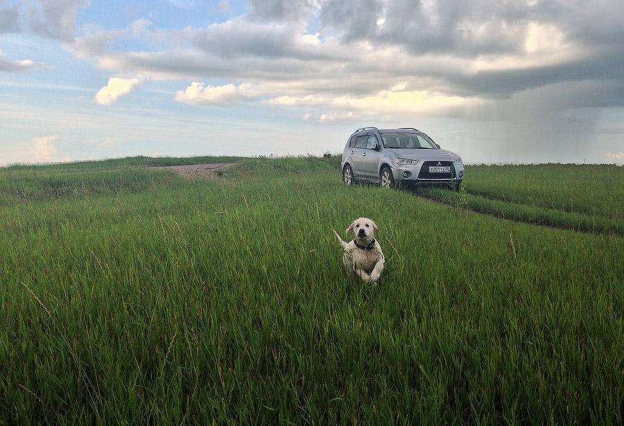 Арчи в полях