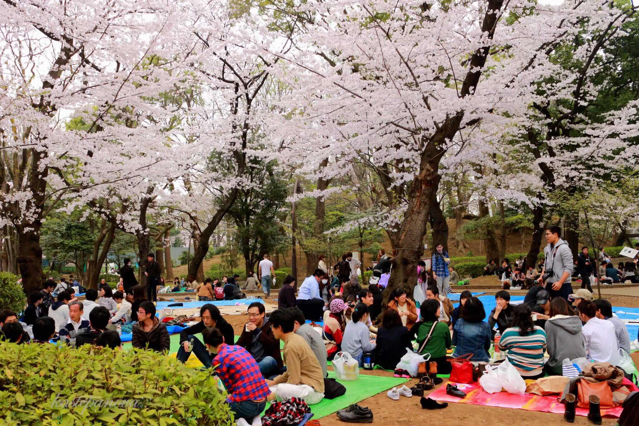 Японки ученицы директор 16 фотография
