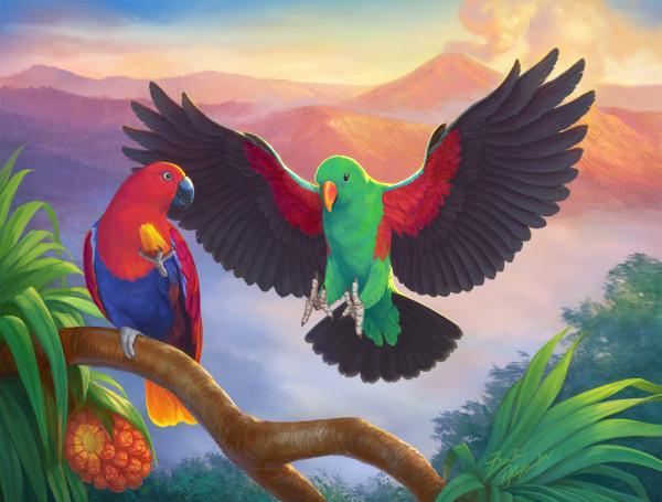 Eclectus parrot 8 - Benlin Alexander