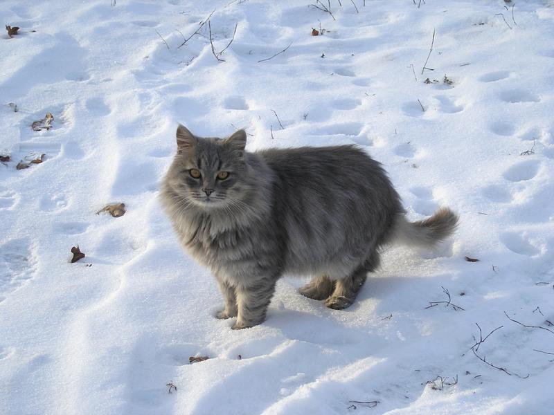 зимний серый 2