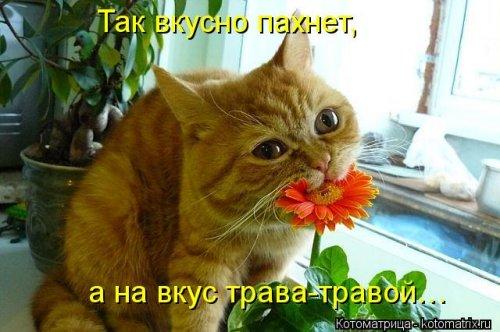 __svezhaya-kotomatrica-39-sht-0