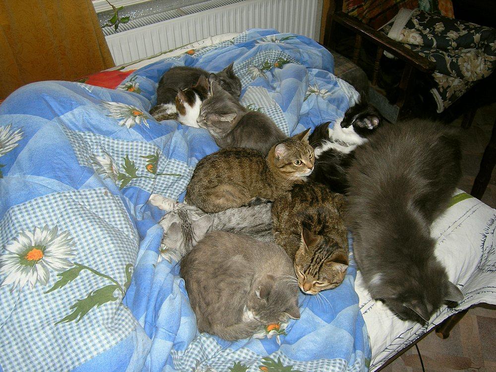 сколько кошек