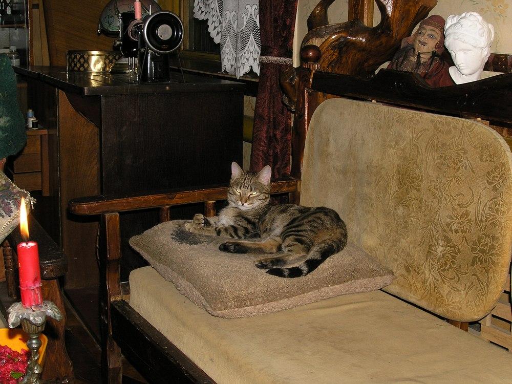 пряник кот