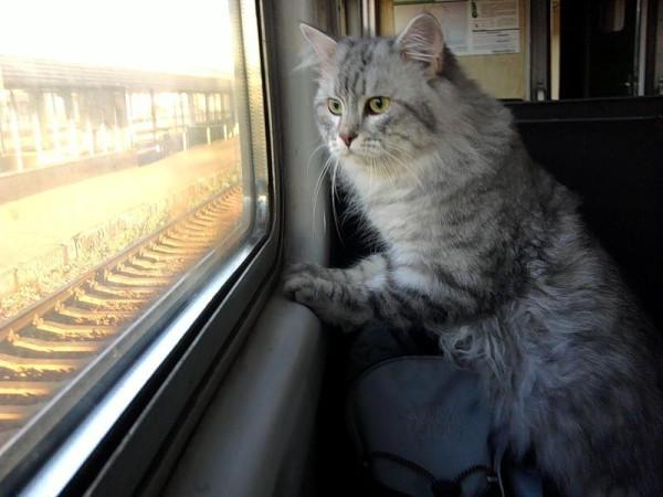котик едет домой