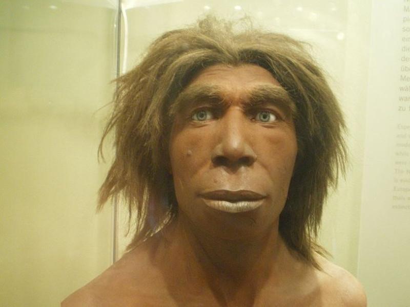Реконструкция неандертальца из Музея естественной истории в Берлине