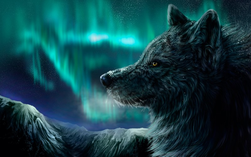 real-northern-lights-wolf-wallpaper-1