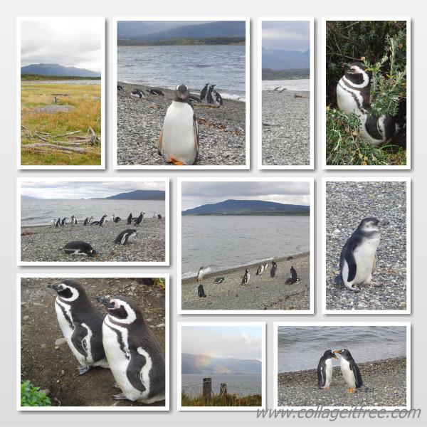 пингвины2