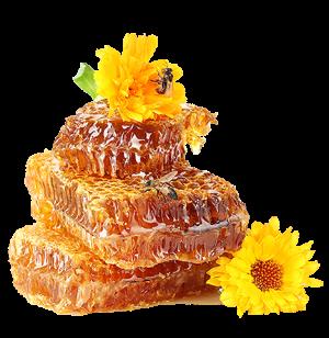 соты с мёдом.png