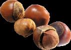 лесной орех.png