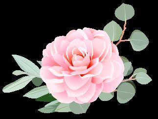 camellia flower.png