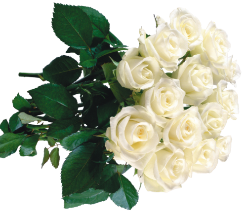 букет белых роз.png