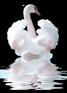 Лебедь 2.png