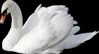 Лебедь 8.png