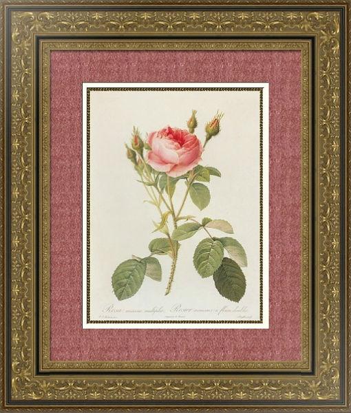 роза 1.jpg