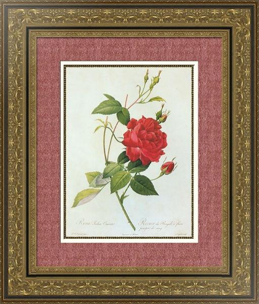 роза 2.jpg