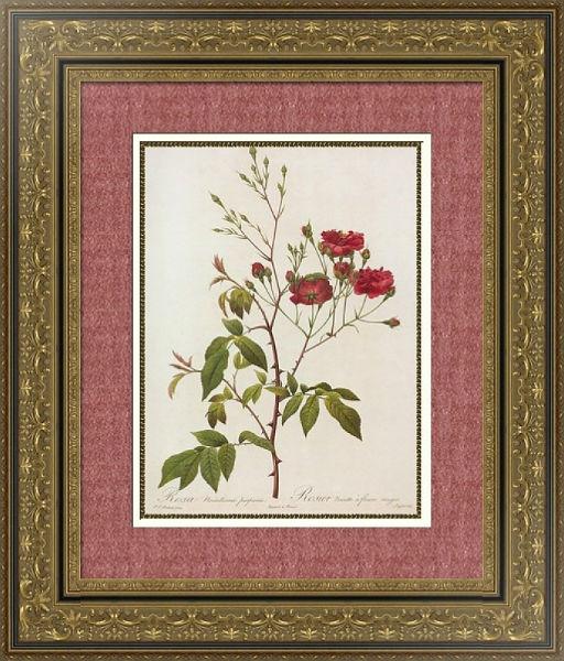 роза 3.jpg