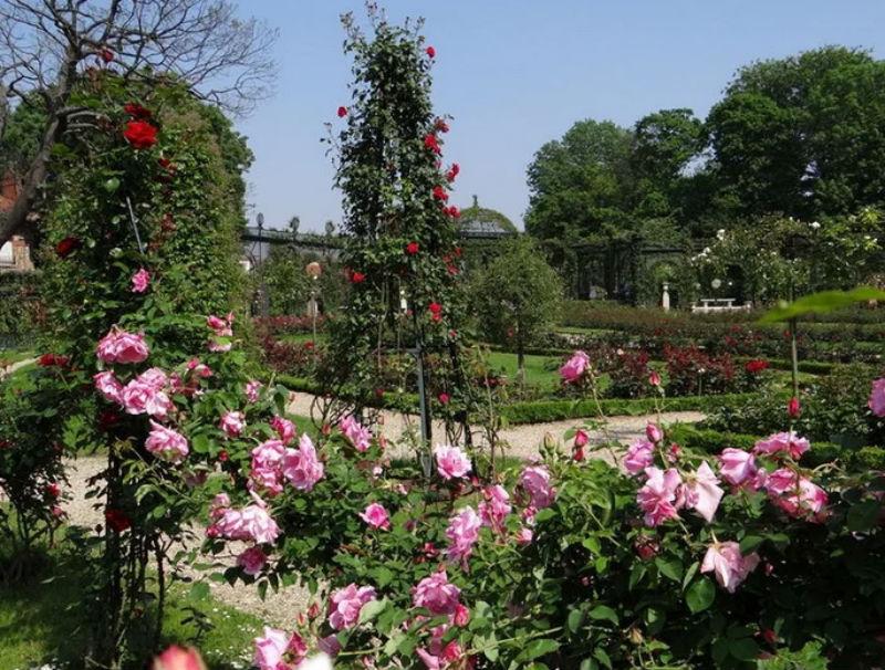Розы дворца Мальмезон.jpg
