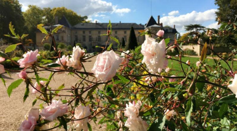 Дворец Мальмезон - розы.jpg