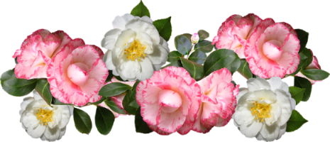 camellias-1.png