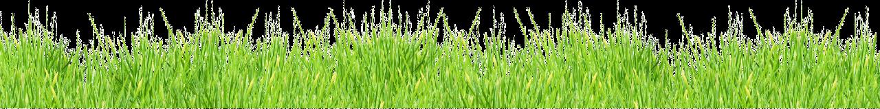 весенняя трава.png