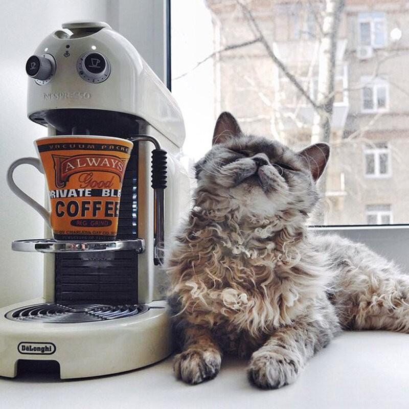 Кошка и кофе.jpg