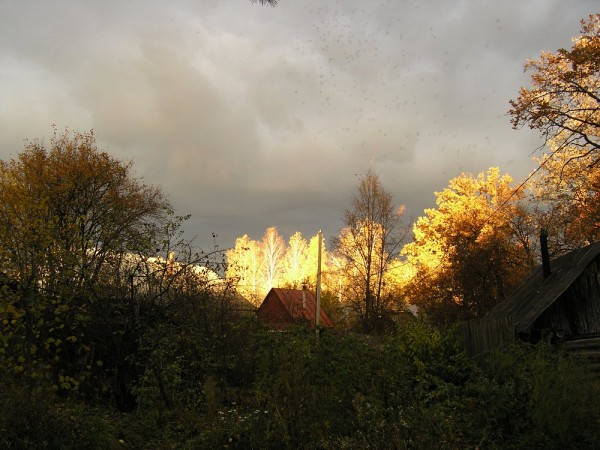 Закатное золото