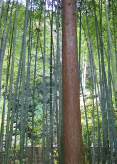 Nanzen-ji forest