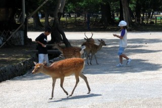 Deer and small children in Nara