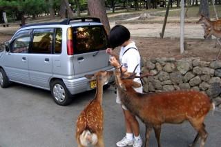 Deer and Kate in Nara
