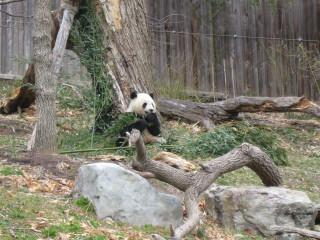 Mmm, bamboo