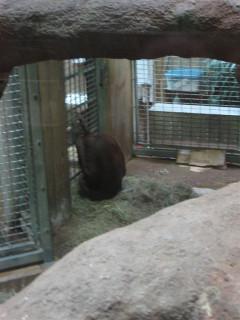 Orangutan saying 'Let me out!'