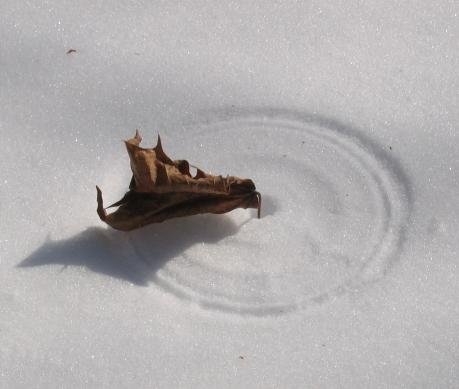 leaf circle in snow