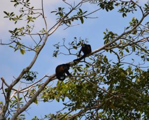 several monkeys