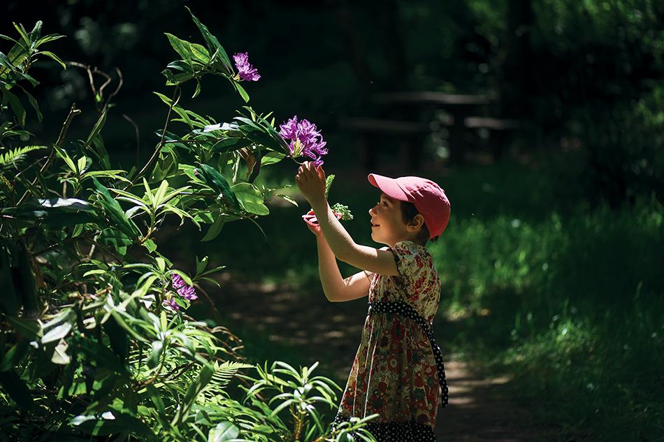 Гленгарский лес