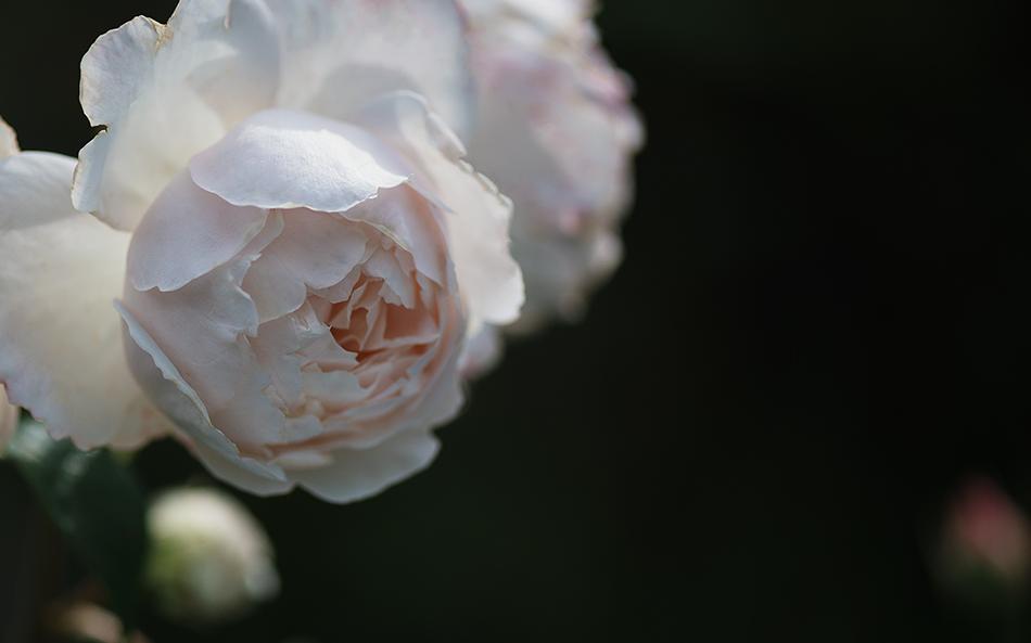 'Desdemona'
