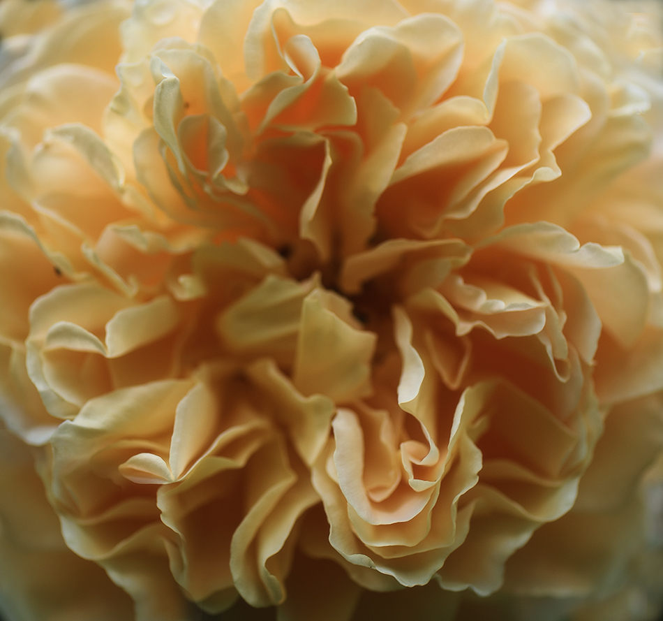 Crown Princess Margareta