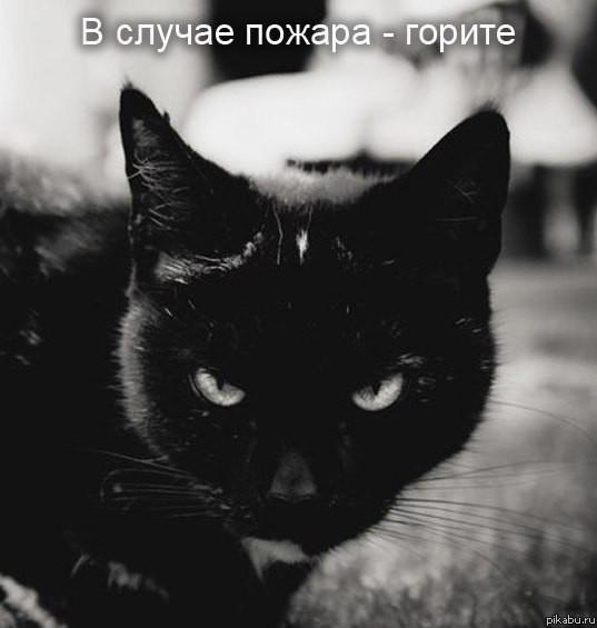 кот-ненависть-инструкция-песочница-486886