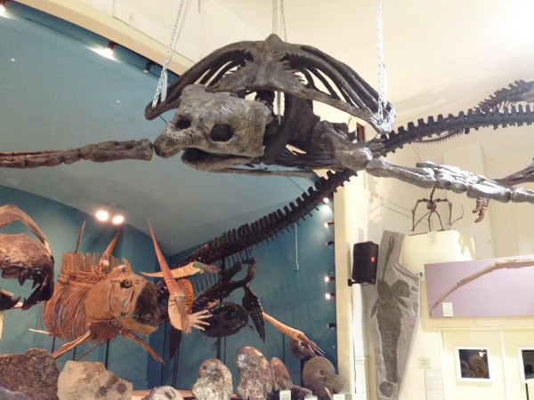 20-dinosaur-museum
