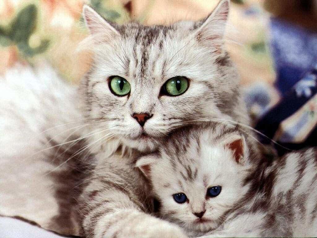 second_cat.jpg