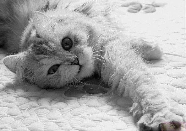 Для, картинки с надписями ты лучше всех котиков