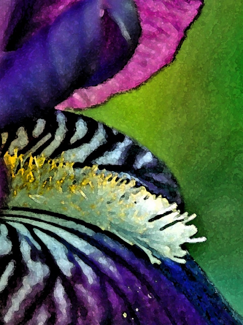 Iris watercolor (480x640)