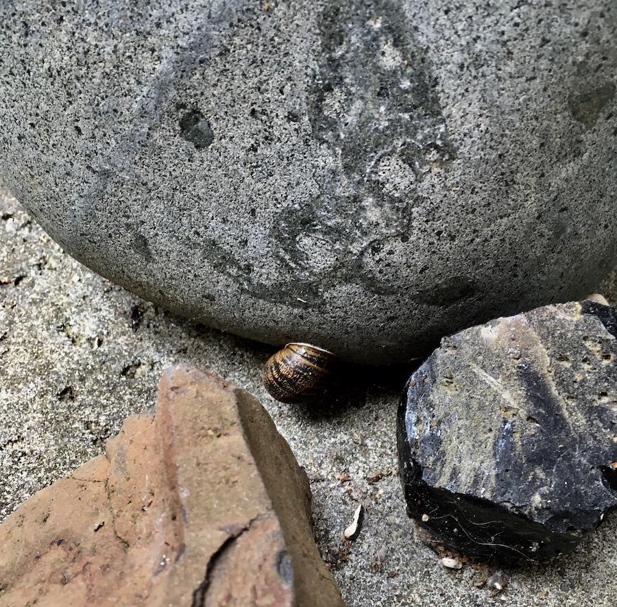snailHouseLJ