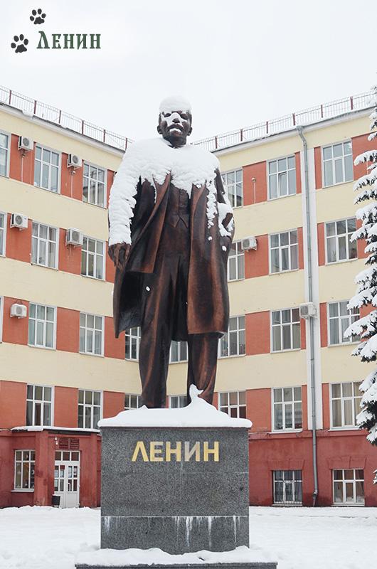 В Клинцы! За Лениным!